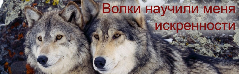 Волки научили меня искренности